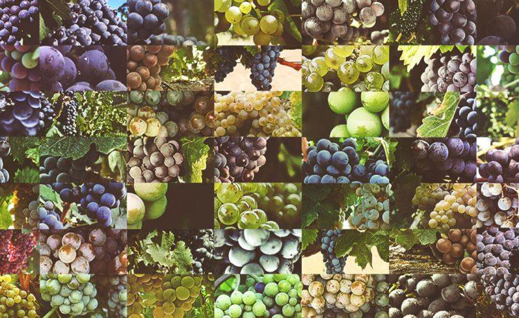 Cu ntos tipos de uva hay para vino en el mundo casa goenaga for Cuantos tipos de arboles hay en el mundo